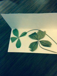 FullSizeRender 225x300 Four leaf clovers